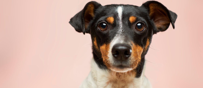 Pet Friendly Accommodation Mackay